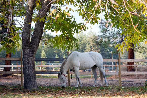 wendy elrick equine connection coaching services