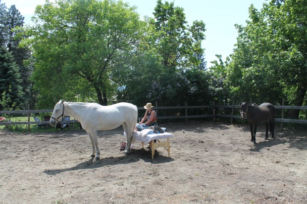 Horses as Energy Workers